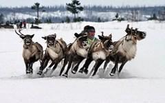 В Эвенкии разработали «олений маршрут» для туристов