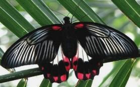 В Никольскую башню «слетятся» бабочки