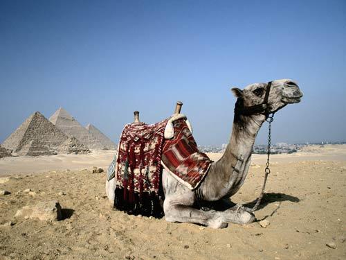 Приход нового президента не уменьшит российский турпоток в Египет