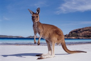 Австралия с начала года приняла на 20% больше туристов из России