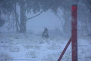 В Южной Австралии начались снегопады