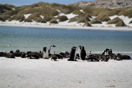 Фолклендские острова ожидает успешный туристический год