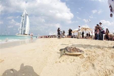 В Дубае завершилась гонка морских черепах