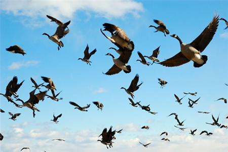 Фестиваль перелетных птиц пройдет в Корее