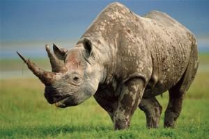 В ЮАР носорог напал на германскую туристку