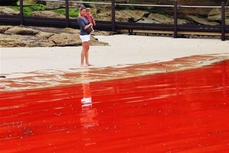Пляжи Сиднея закрыли из-за водорослей