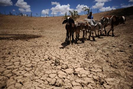 Засуха в Бразилии привела к многочисленным проблемам