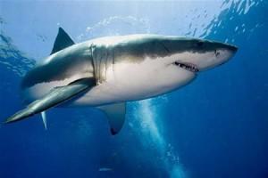 Побережье Флориды атаковали акулы