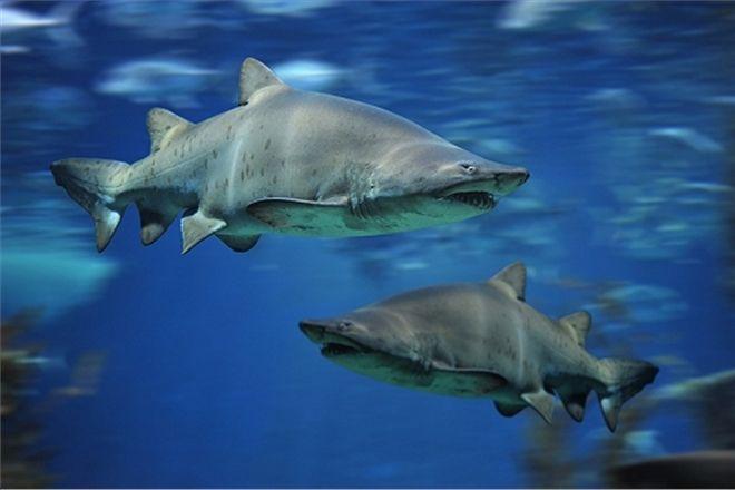 Испанский пляж закрыли из-за акулы