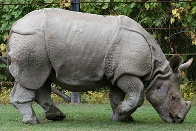 Носорог укусил посетительницу зоопарка