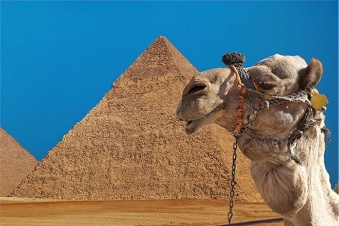 Египет хочет сделать визы бесплатными