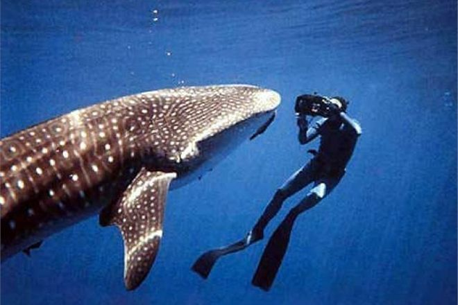 Акула отобрала у туриста фотокамеру