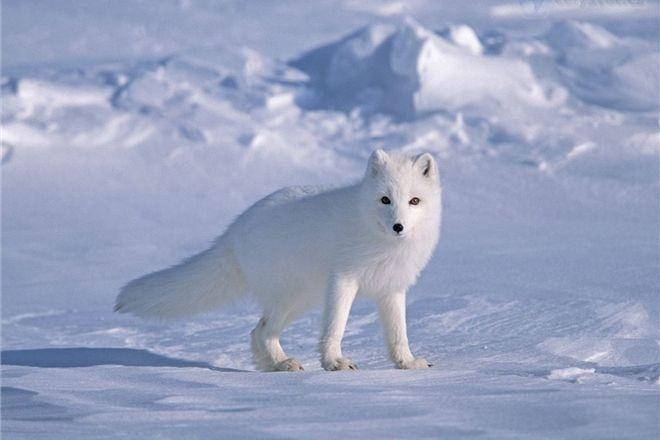 В Воркуте организуют путешествия к Северному Ледовитому океану