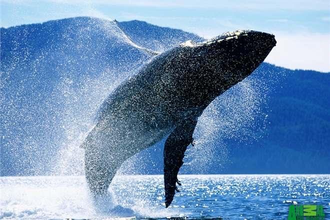 Туристы едут в ЮАР любоваться китами