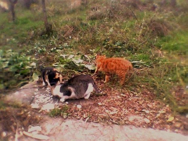 Кошачья Одесса