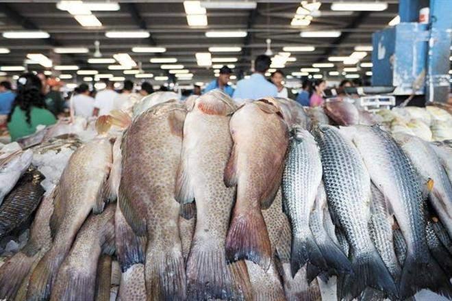 В Финляндии пройдет ночь рыб