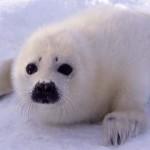 Дружелюбный тюлень взобрался на каноэ к туристам