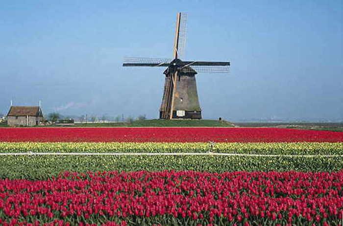 Получить визу в Голландию стало еще проще