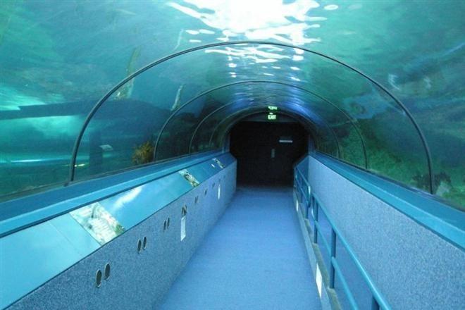 В Австралии открыта первая в мире подводная выставка