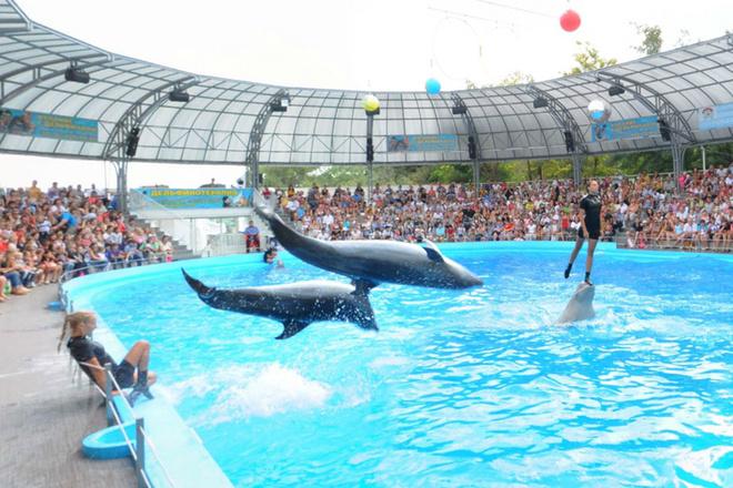 В Украине открылся отель с дельфинами