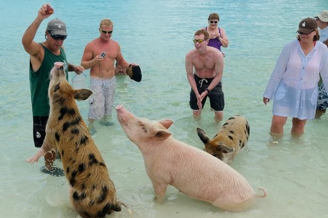 Необычное занятие предлагается гостям маленького необитаемого острова в составе Багамского архипелага