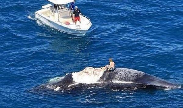 Верхом на ките среди акул