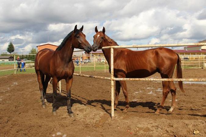 Смоленщина собирается развивать конный туризм