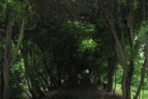 В Дубае вновь открывается «Чудесный сад»
