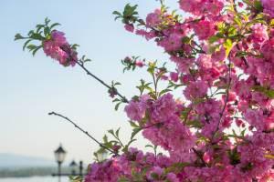 В Испании зацвел миндаль и началась весна