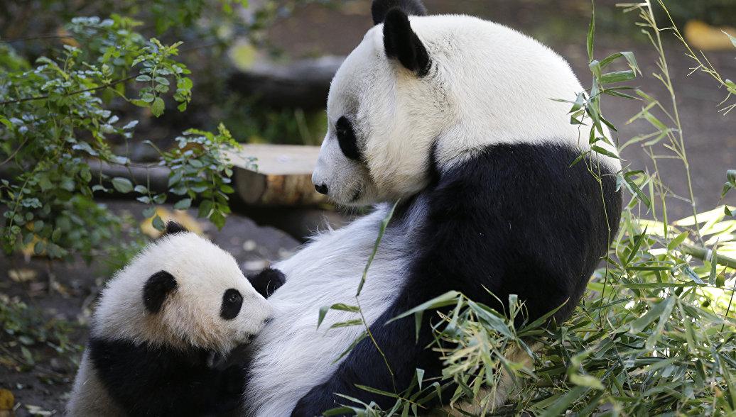 Панды, лемуры, фламинго и коалы. Что интересного в лучших зоопарках мира