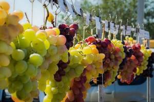 На «Донской лозе» будут катать бочки и пить местное вино