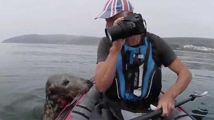 Тюлень захотел покататься на байдарке вместе с туристом в Англии