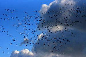 В Московской области после столкновения с птицами экстренно сел самолет с полными баками