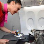 «Эти пассажиры такие странные!» Что больше всего поражает стюардесс?