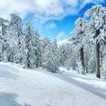 В Японии горнолыжные курорты закрываются, зато на Кипре со снегом все в порядке