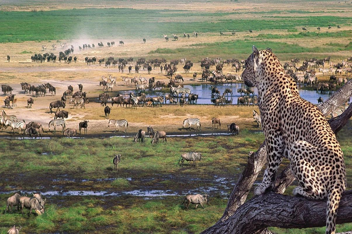 Национальные парки Танзании