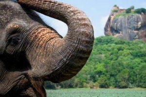Шри-Ланка разрешила въезд туристов