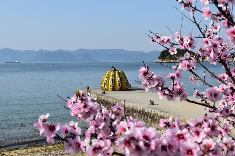 Цветение сакуры в Японии в этом году начнется на 10 дней раньше обычного