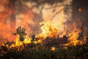 Генконсульство: туроператоры отменили экскурсии в районе Антальи, где бушуют лесные пожары